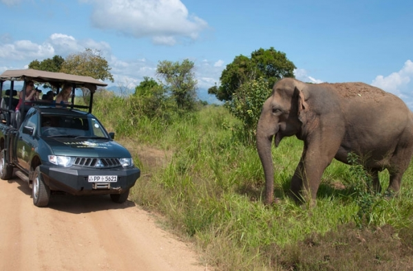 Sri Lanka Tourism Development Authority Launches Initiative To Train 4000 Safari Operators Country-wide
