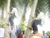 State Minister In Charge Of Coconut Climbs A Coconut Tree