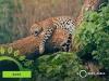 Sri Lanka Tourism goes virtual to promote 'Wildlife'